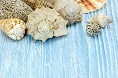 Colorful seashells on blue rustic wooden background Stock Photos