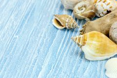 Colorful seashells on blue wooden background. summer time concep Stock Images