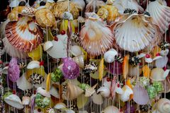 Colorful seashells in decoration in tropical sea marine life. Decoration made of colorful seashells from the sea. Red, yellow, green and white big and small royalty free stock photos