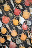 Colorful seashells hanging on a fishing net close-up diagonal view Stock Images
