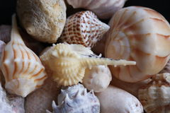 Colorful Seashells. Many different colored seashells from the florida coast Stock Photo
