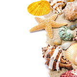 Colorful seashells on sand Royalty Free Stock Photography
