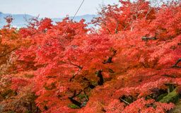 Colorful  Season Kyoto  in Autumn Royalty Free Stock Photography