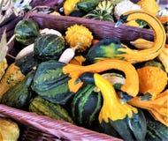 Colorful seasonal gourds in purple wicker basket. Harvest bounty fo green and gold seasonal gourds displayed in a purple wicker basket Stock Photography