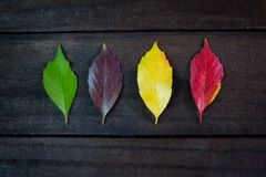Colorful seasonal leaves with brown wood backing. Seasonal leaves with brown wood backing Royalty Free Stock Photography