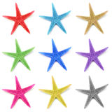 Colorful seastars, isolated on white background Royalty Free Stock Photo