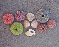 Colorful seaurchins and shells on wet sand beach Stock Photo