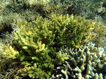 Colorful seaview with acropora corals royalty free stock photography