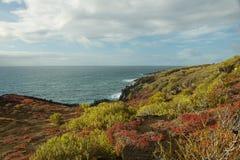 Colorful Sesuvium on Punta Pitt in San Cristobal Island Royalty Free Stock Image