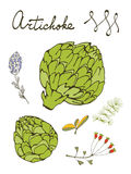 Colorful set of fresh hand drawn artichokes Stock Photography