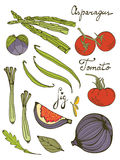 Colorful set of fresh hand drawn vegetables Royalty Free Stock Photography