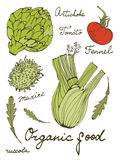Colorful set of fresh hand drawn vegetables Royalty Free Stock Images