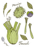 Colorful set of fresh hand drawn vegetables Stock Image
