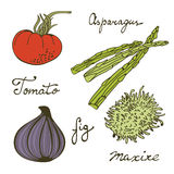 Colorful set of fresh handdrawn vegetables Royalty Free Stock Photography