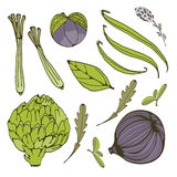 Colorful set of fresh handdrawn vegetables Royalty Free Stock Image