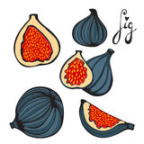 Colorful set of hand drawn figs Royalty Free Stock Images