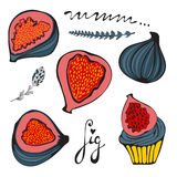Colorful set of hand drawn figs Stock Photography