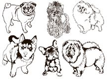 Colorful set of illustrations of dogs of different breeds Stock Image