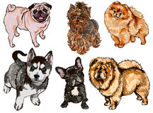 Colorful set of illustrations of dogs of different breeds Royalty Free Stock Photography