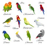Colorful set of parrot icons Stock Photos