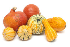 Colorful set of pumpkins Stock Photo