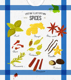 Colorful set of spices in flat style. Vector set Stock Image