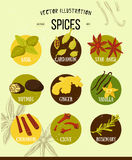 Colorful set of spices in flat style. Vector set Royalty Free Stock Image