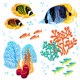 Colorful  set of tropical fishes and corals Royalty Free Stock Image