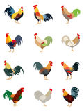 Colorful set of various roosters Stock Image
