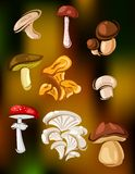 Colorful set of vector mushrooms and fungi Royalty Free Stock Photos