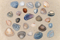 Colorful shell on the beach Stock Photo