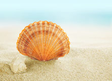 Colorful shell on beach Stock Photo