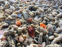 Colorful shell on corals beach in the afternoon of Thailand island royalty free stock images