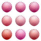 Colorful shells Royalty Free Stock Image