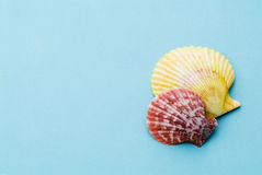 Colorful shells Royalty Free Stock Images