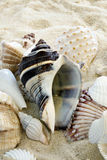 Colorful Shells on beach Stock Photography