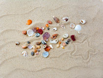 Colorful shells on beach with star Royalty Free Stock Photography