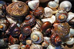 Colorful shells freshly caught in Herakleio, Greece. Beautiful colorful shells freshly caught in Herakleio, Greece spiral beach seafood edible mixed rare summer stock images