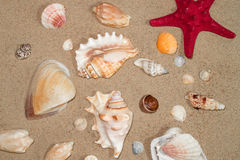 Colorful shells of marine mollusks on yellow sea sand Stock Photos