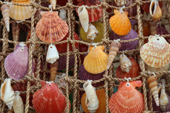 Colorful shells on a net, Boracay Island, Philippines Royalty Free Stock Images