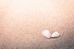 Colorful Shells in Sand at the Beach Stock Image