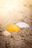 Colorful Shells in Sand at the Beach Stock Photos