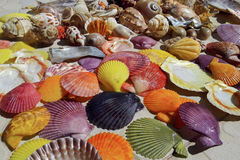 The colorful shells Stock Images