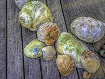 Colorful Shells Still Life. Colorful seashells on deck still-life Stock Image