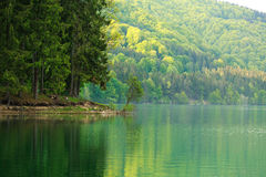Colorful shore of mountain forest by lake in morning sunlight Stock Photography