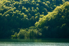 Colorful shore of mountain forest by lake in morning sunlight Stock Photo
