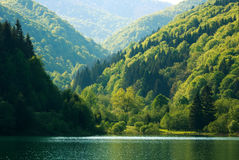 Colorful shore of mountain forest by lake in morning sunlight Royalty Free Stock Images