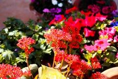 Plants closeups macro shots viberants. Colorful shots closeups plants vibrant stock images