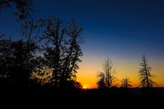 Colorful Sierra Sunset With Tree Silhouettes royalty free stock photos