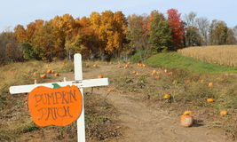 Colorful sign saying pumpkin patch Stock Image
